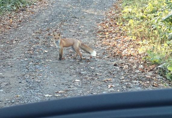 狐F20171021