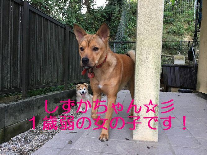 IMG_7839 - コピー