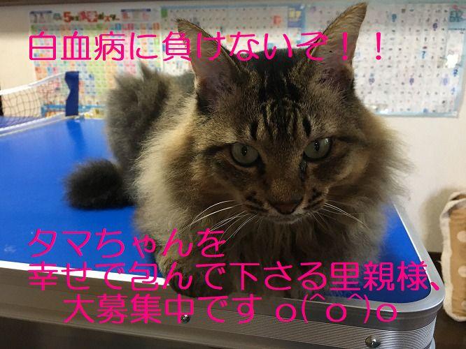 IMG_7771 - コピー