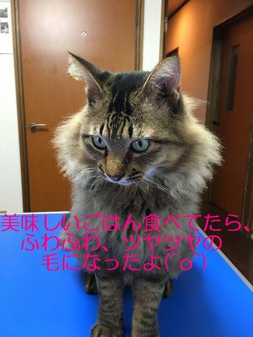 IMG_7754_20171022190328873.jpg