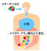 最先端再生医療美容サプリ!年齢で減少する4大成分にHGH系で肌の若さを取り戻す【メセルインナービューティー】口コミ。