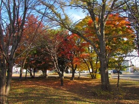 紅い葉の木の下は