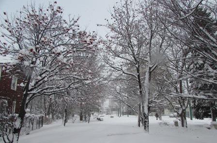 11月の雪景色