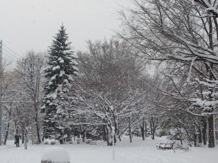 みごとな雪