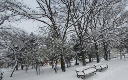 雪の降る朝