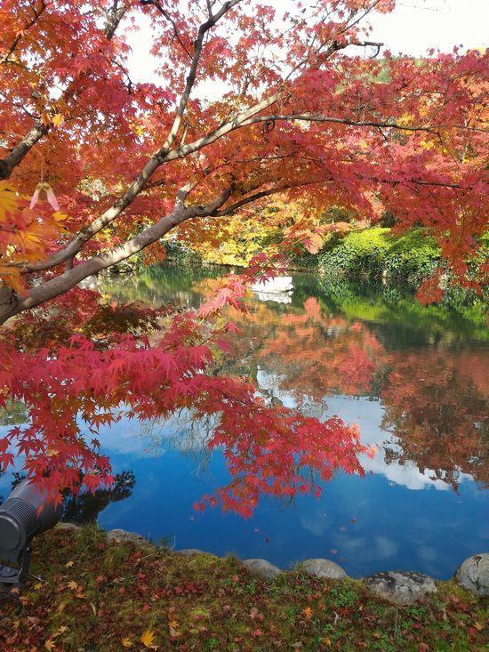 kyoto_kouyou_01.jpg