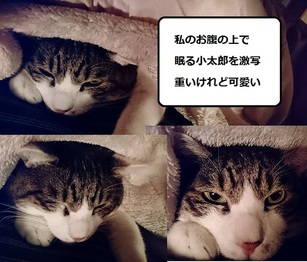 DSC_0960_20171219082928343.jpg