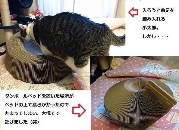 DSC_0972_20171227082141dba.jpg