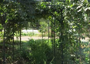 菜園の草葉の陰2