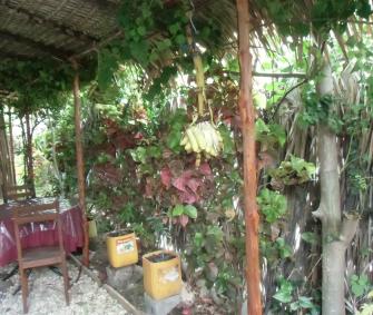 マダガスカル海岸のレストラン、バナナがある風景