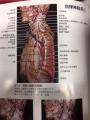 自律神経1