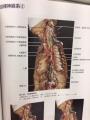 自律神経2