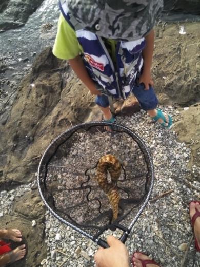 第五回釣り大会葉山2017-09-30 (53)