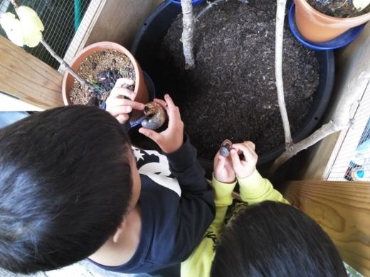 幼虫の糞 (9)