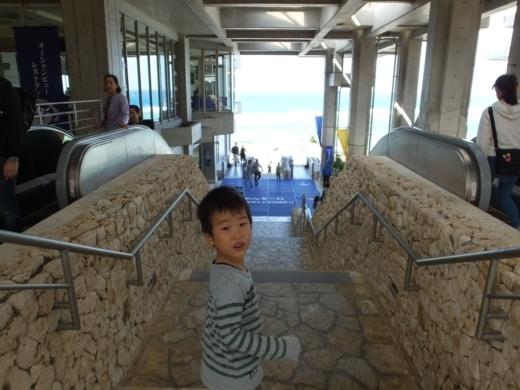 美ら海水族館 (1)