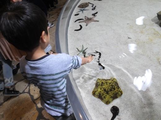 美ら海水族館 (3)