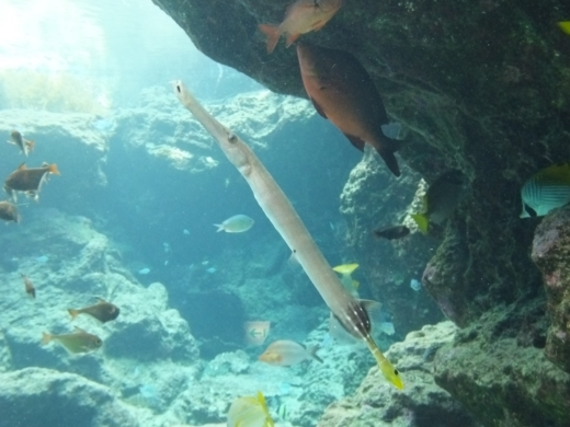 美ら海水族館 (5)