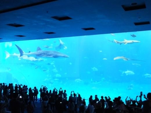 美ら海水族館 (13)