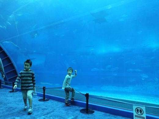 美ら海水族館 (18)