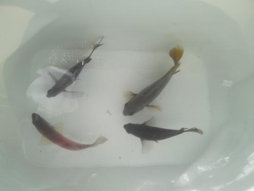 沖縄本部釣り (7)