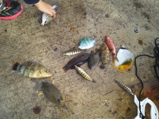 沖縄本部釣り (30)