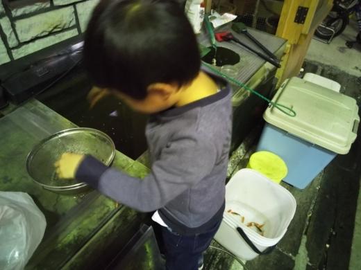 エサ金魚 (1)