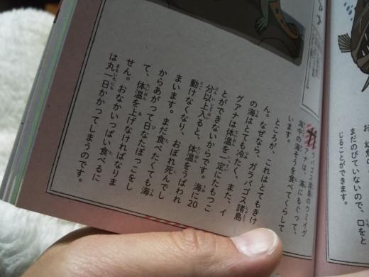 冬の亀小屋 (1)