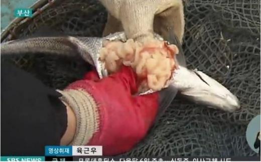 朝鮮魚寄生虫1