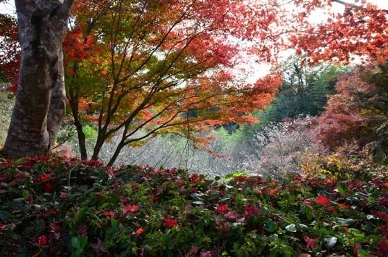 DSC_2607-桜と紅葉