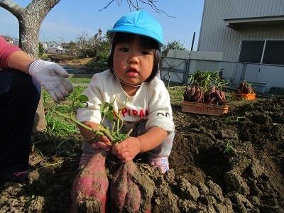 芋掘りめい