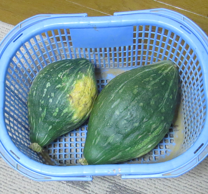 カボチャ収穫物10月