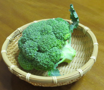 ブロッコリー秋収穫物