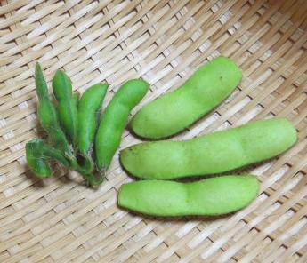 小粒黒豆と普通のエダマメ