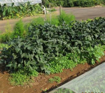 小粒黒豆菜園1