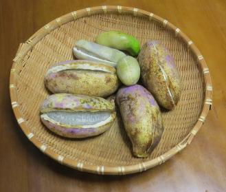 アケビ収穫物