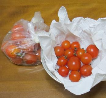 ミニトマト収穫物11月下旬