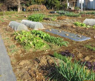 菜園12月下旬1