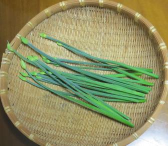 花ニラ収穫物