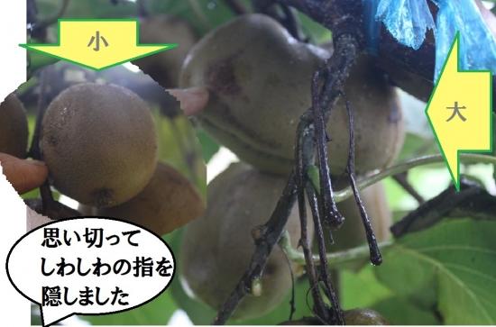 キウイ1021_3812 (8)