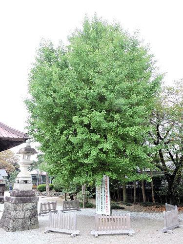 171101tochigi33.jpg