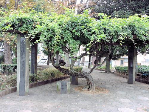 171101tochigi37.jpg