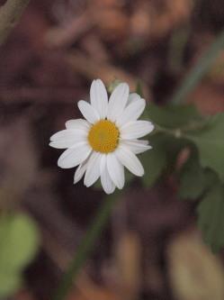 PA189954.jpg