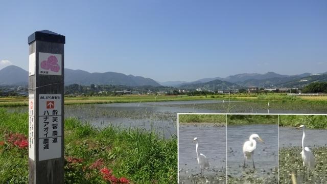 9あしがら花紀行道標と田園風景