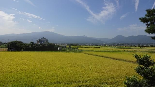 3黄金色の田と箱根の山並み