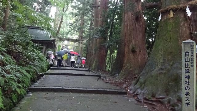 3表参道と老杉(御神木)