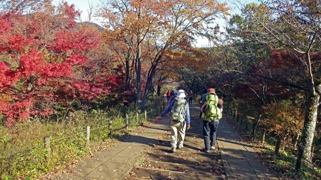 6紅葉の坂道