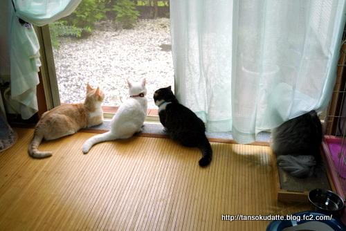 窓辺のできごと