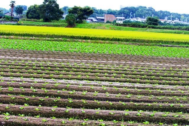 畑と田んぼ