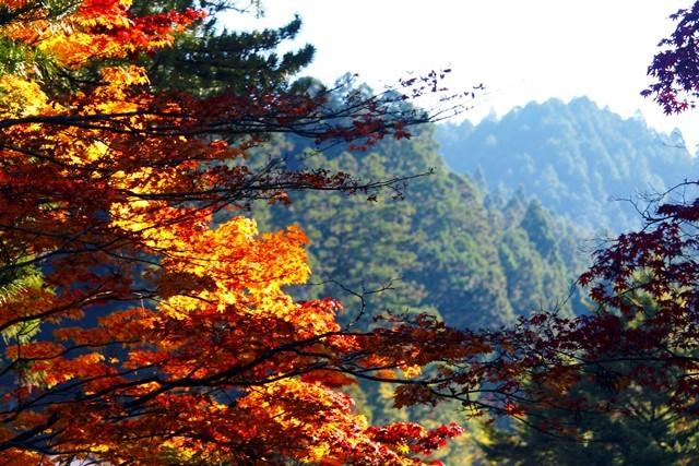 高野山18