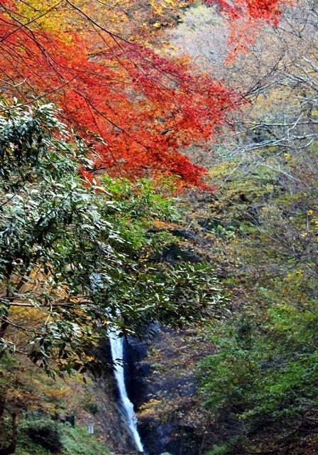 猿尾滝 紅葉